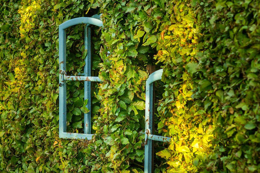 Beech hedge with window (Kreislehrgarten, Steinfurt, Germany)