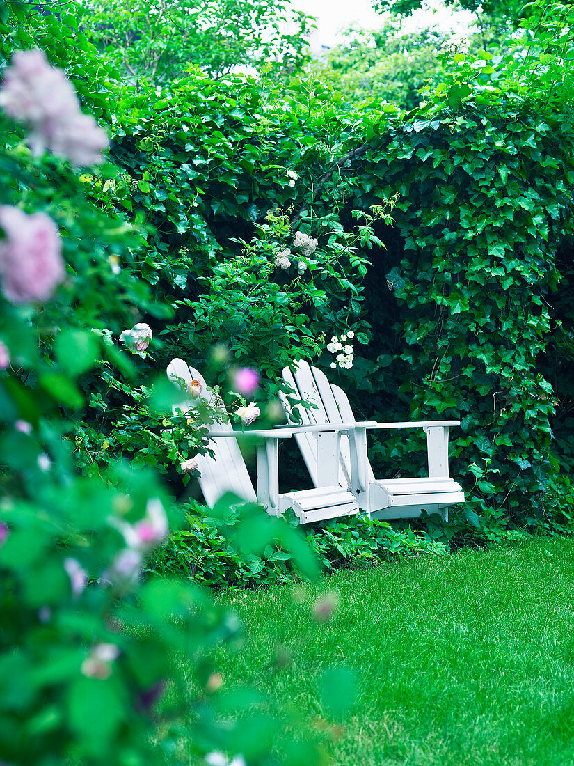 Hidden seating area amongst ivy and roses