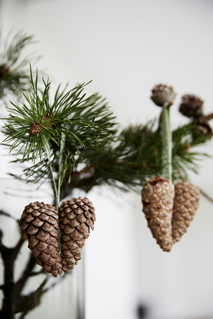 Heart-shaped pine-cone decorations hung from branch