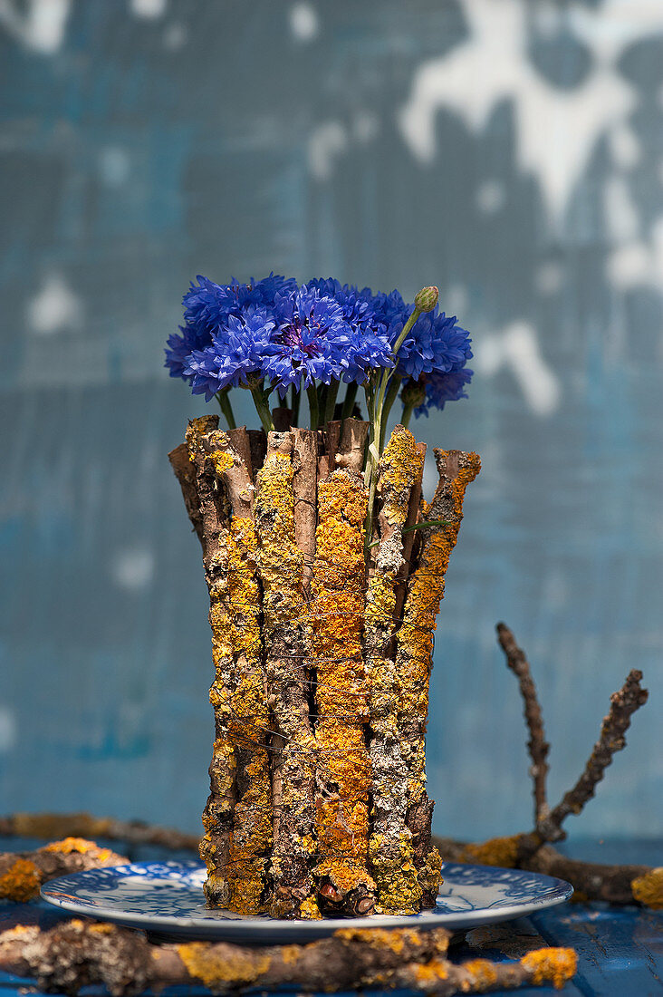 Unusual free-standing bouquet of cornflowers surrounded by lichen-covered twigs