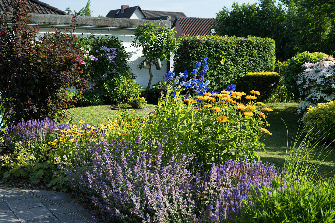 Blue-yellow bed with catmint, girl's eye, sun's eye and delphinium
