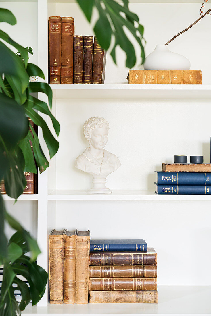 Swiss cheese plant in front of old books and bust on white shelves