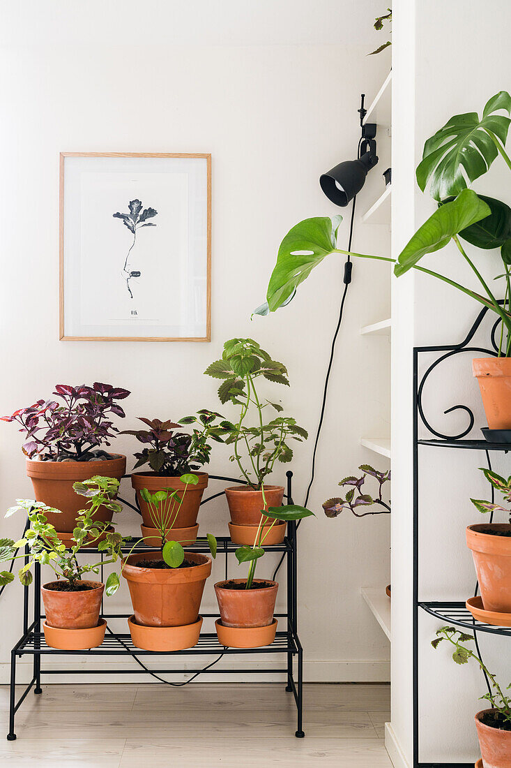 Many houseplants on plant stand below picture