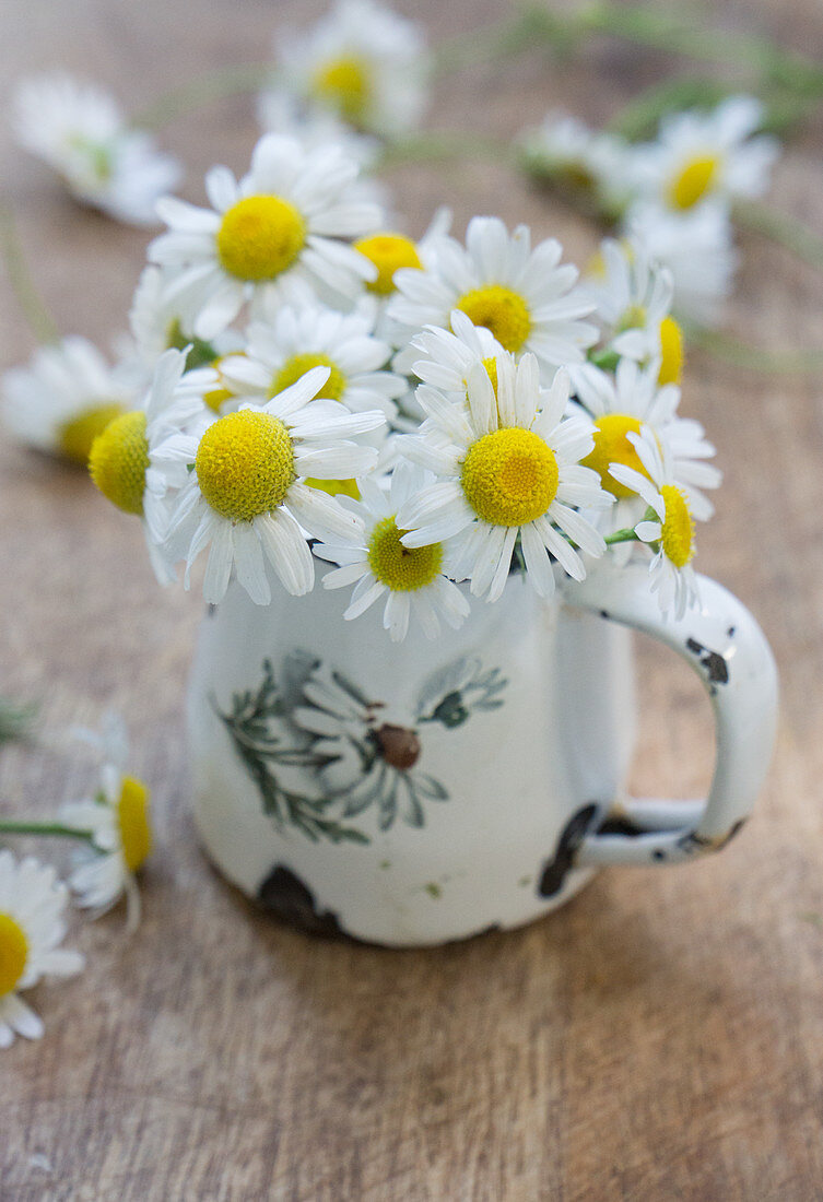 Posy of chamomile flowers
