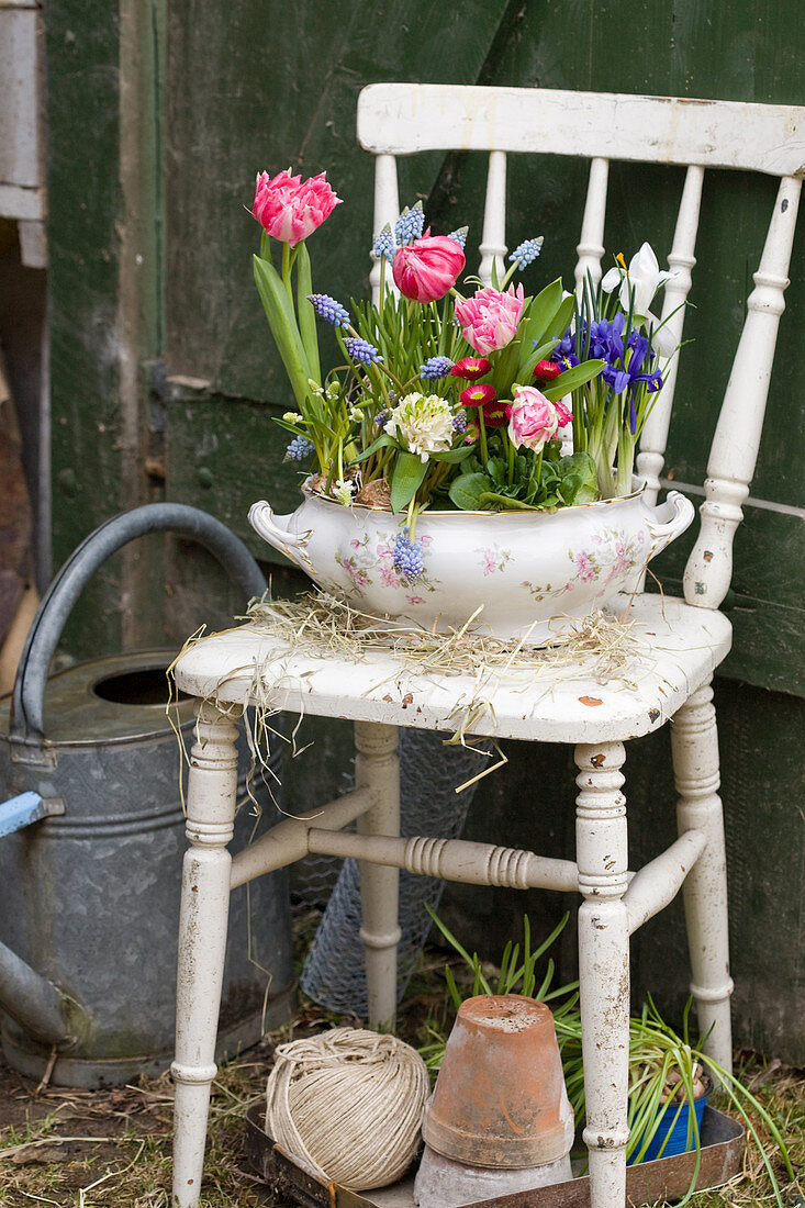 Old soup tureen planted with tulips, reticulated iris, bellis, grape hyacinths and hyacinths