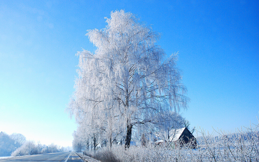 Tree and house in winter landscape