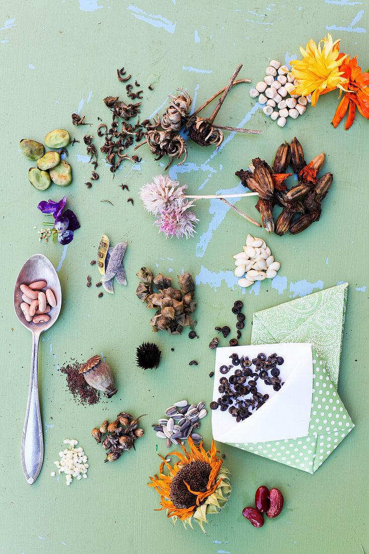 Tableau mit Sämereien und Blüten