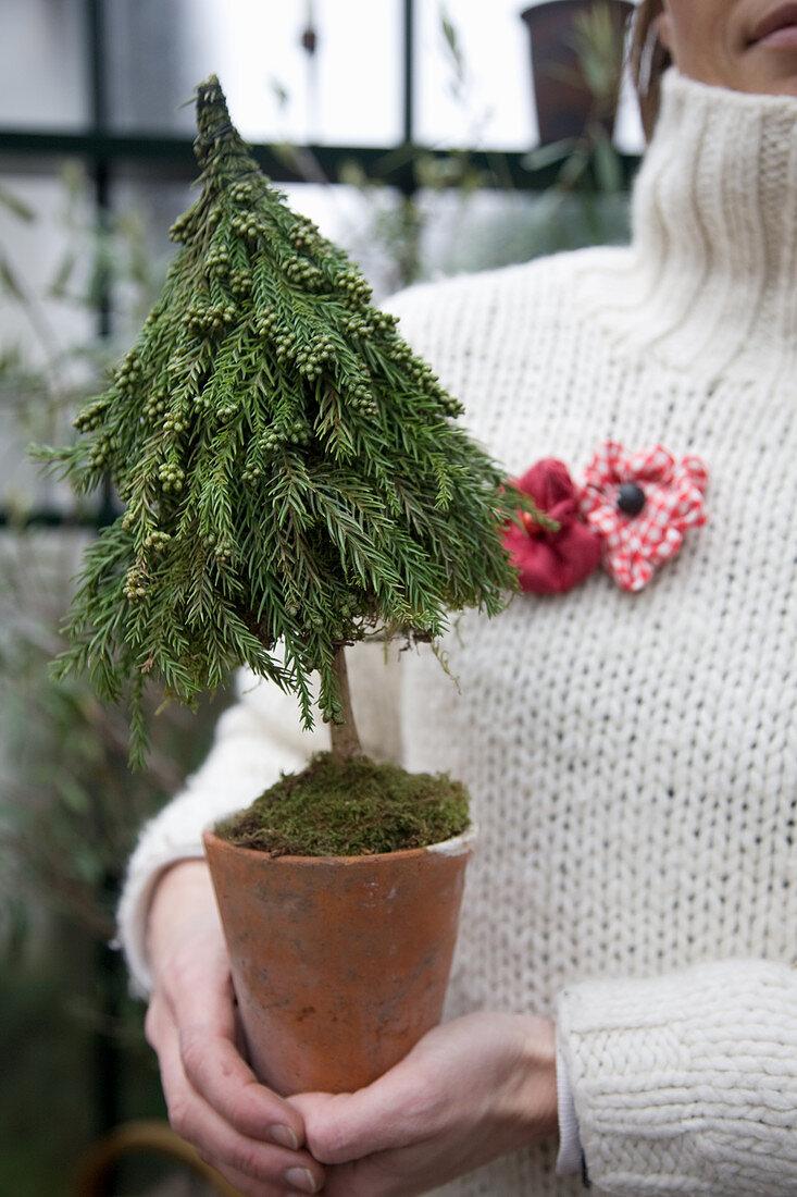 Small Christmas tree in flowerpot