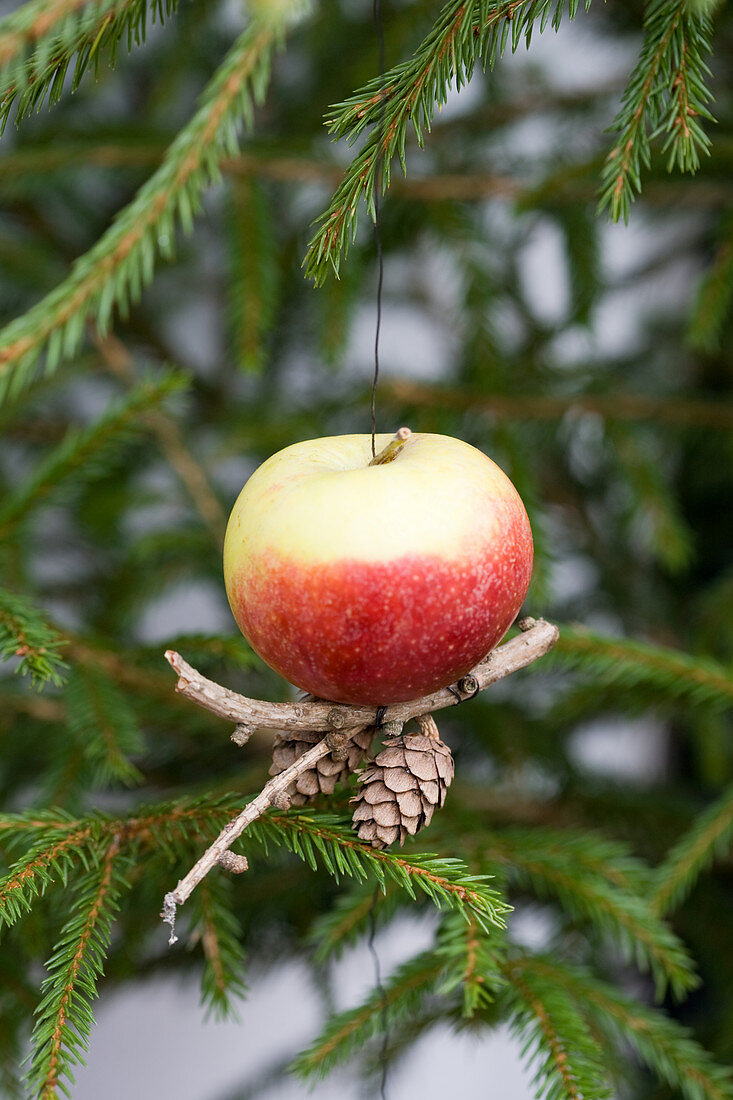 Apple hanging from Christmas tree
