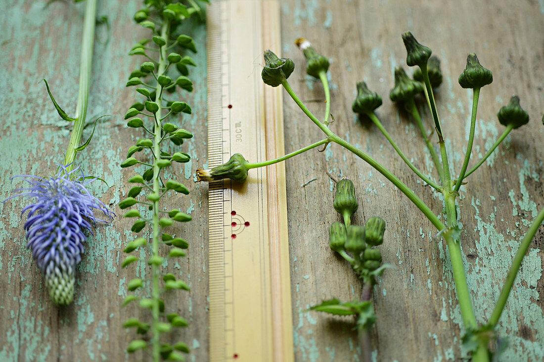 Spike rampion, narrowleaf pepperweed and sow thistle