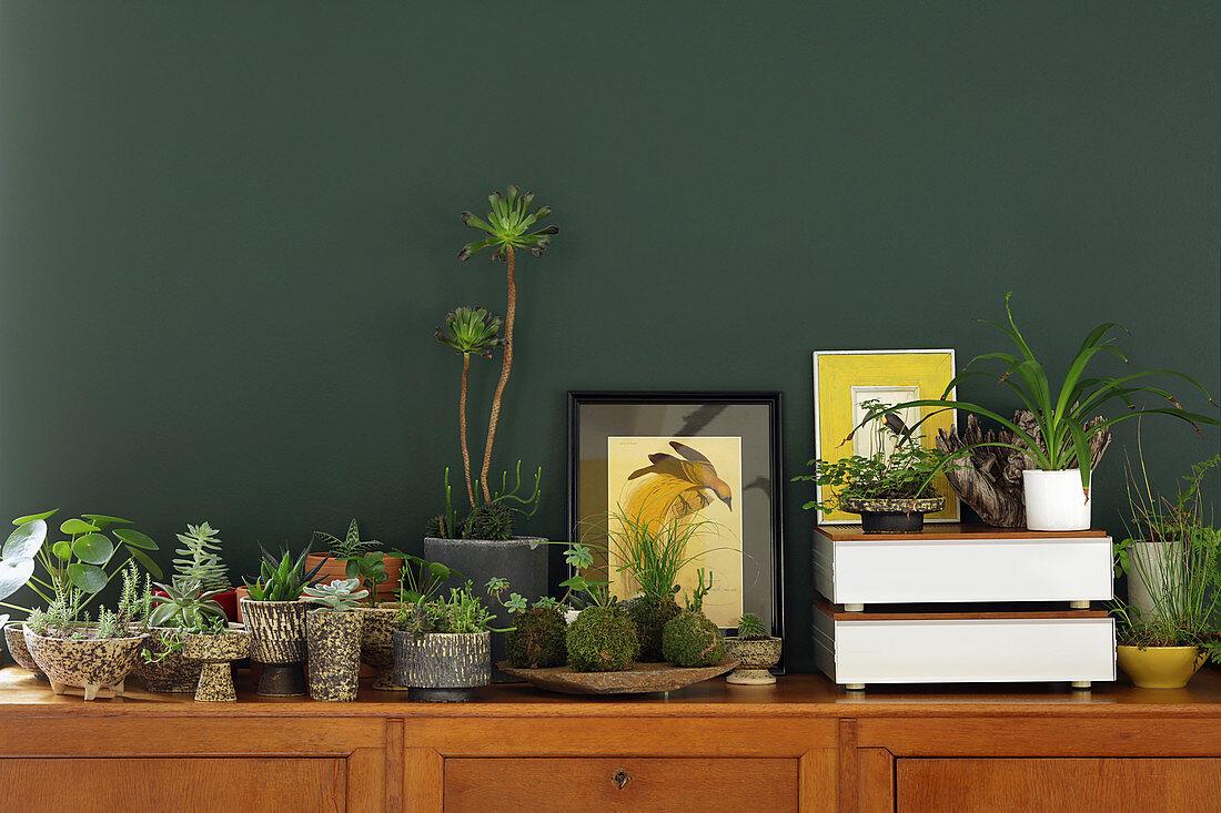 Houseplants on sideboard