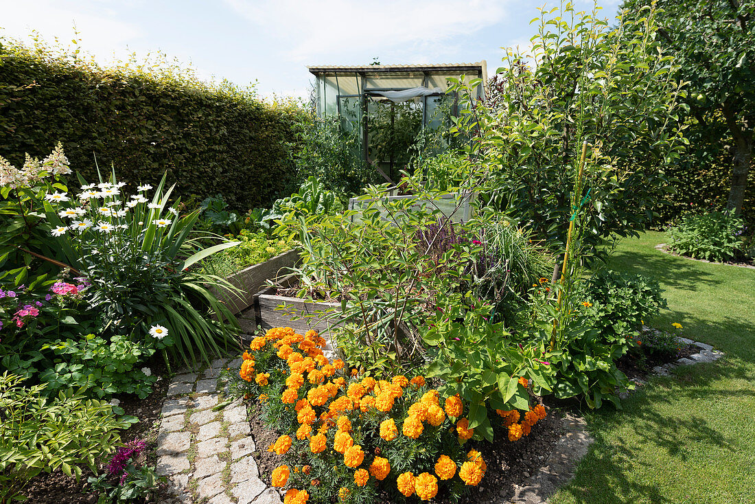 Summer garden with a greenhouse, a path between flower beds, and raised beds