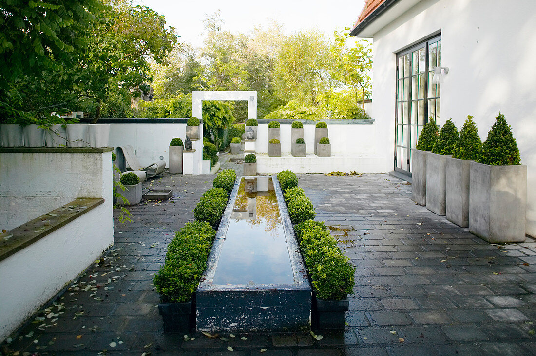 Raised pond edged by box bushes on terrace