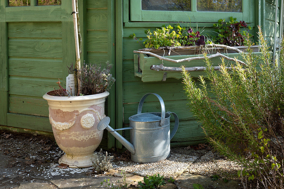 Rosemary, balcony box, planter and watering can at the garden house