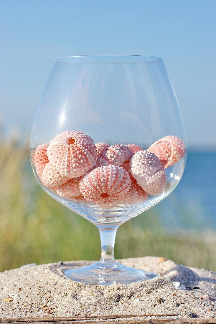 Seeigel-Gehäuse im Glas