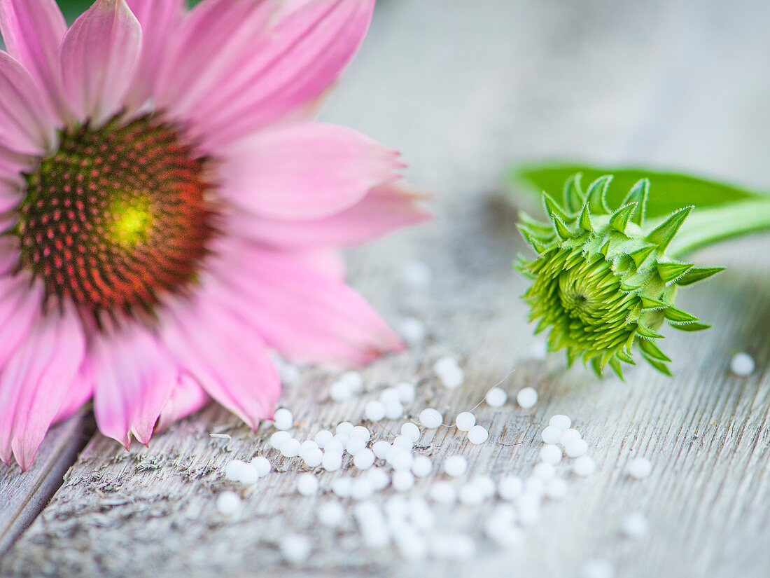 A pink echinacea flower on a wooden surface