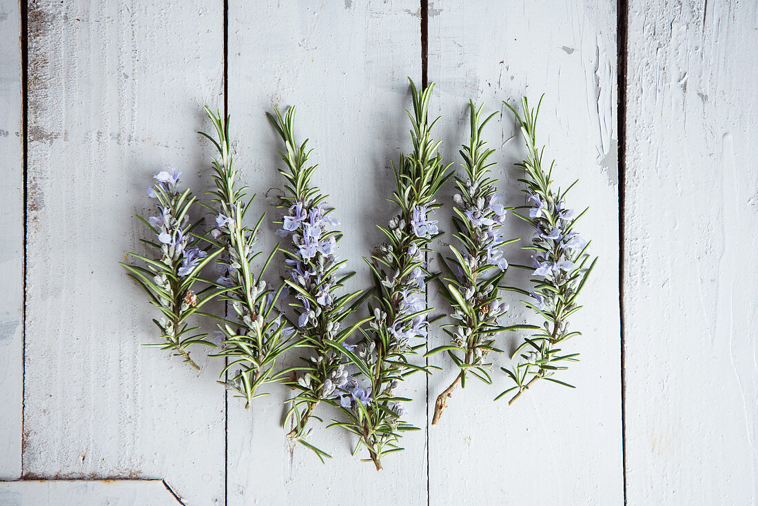 Flowering branches of rosemary