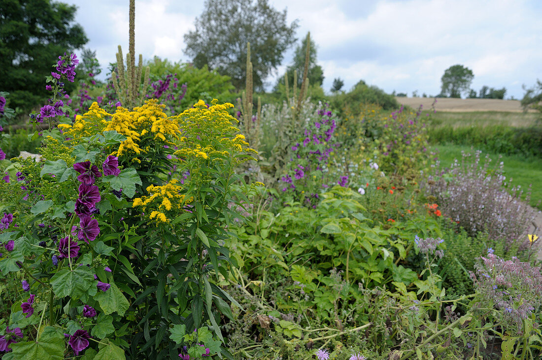 Sensory garden in Papendorf, Germany: goldenrod and mallow