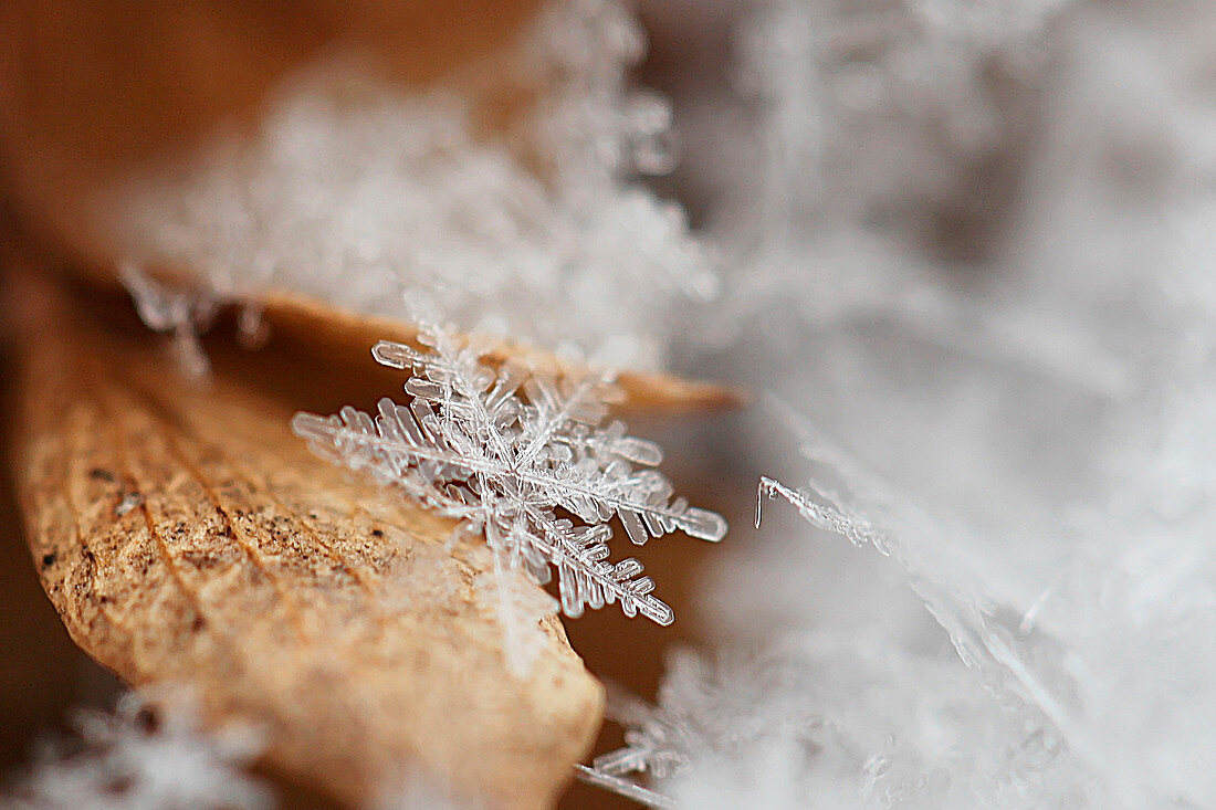 Close-up of a snowflake