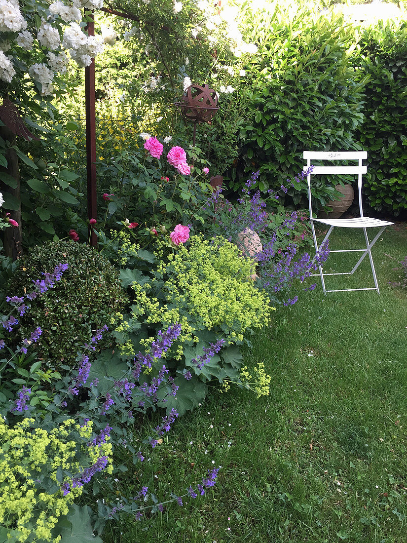 Flower bed with roses, catmint, lady's mantle, and boxwood