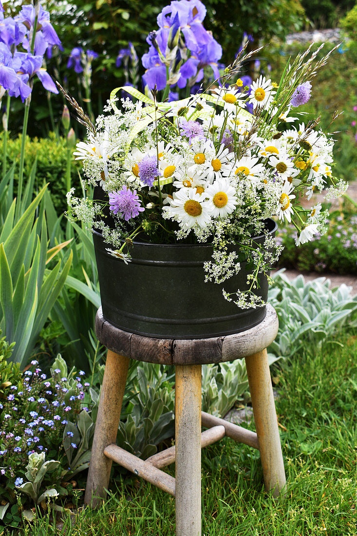 Bouquet of spring marguerite daisies, Knautia, grass, and Caraway on a stool in the garden