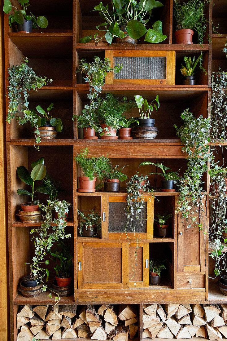 Verschiedene Grünpflanzen in einem alten Wandschrank