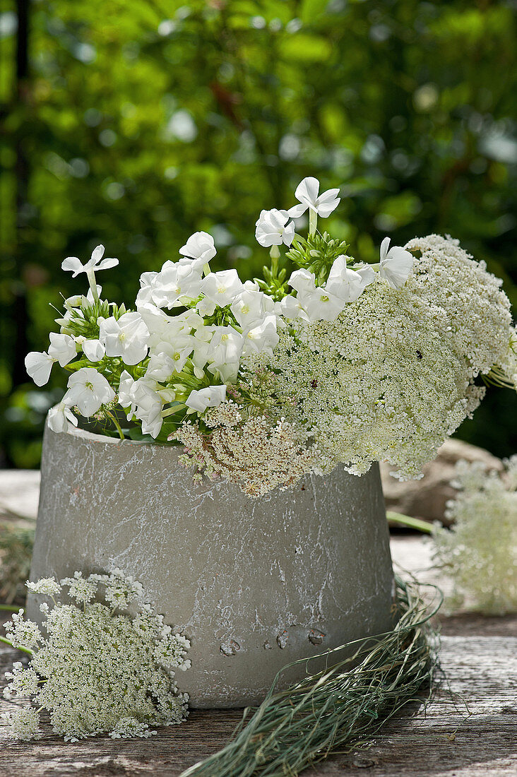 Queen Anne's lace and phlox