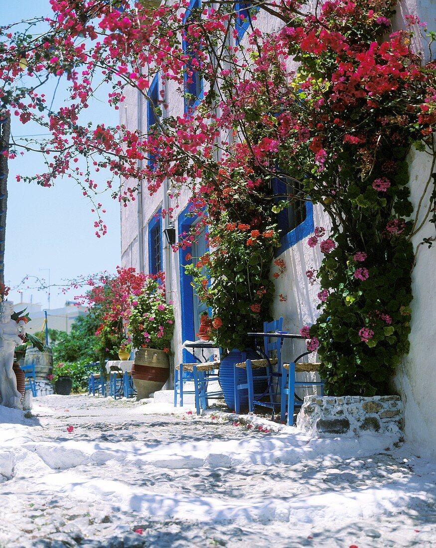Mediterranean atmosphere with lavishly flowering bougainvillea in front of a street café in Greece