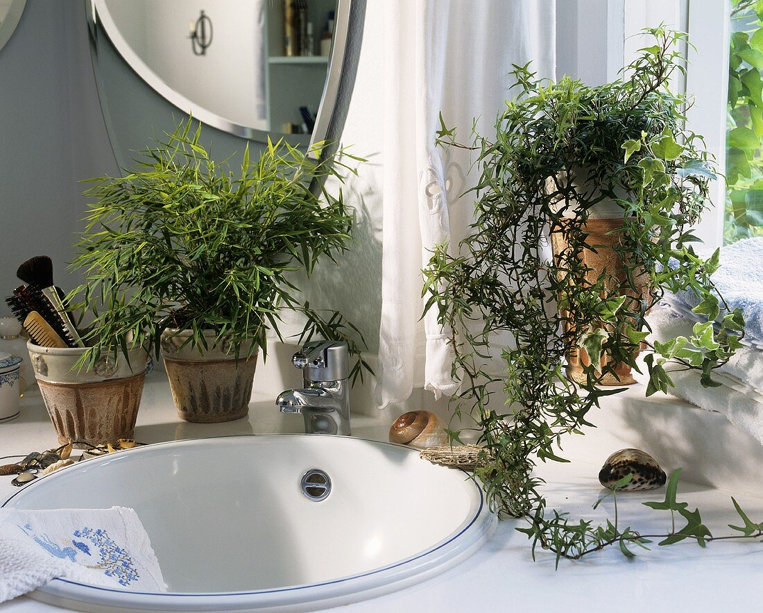 Potted bamboo and trailing ivy brighten up wash basin