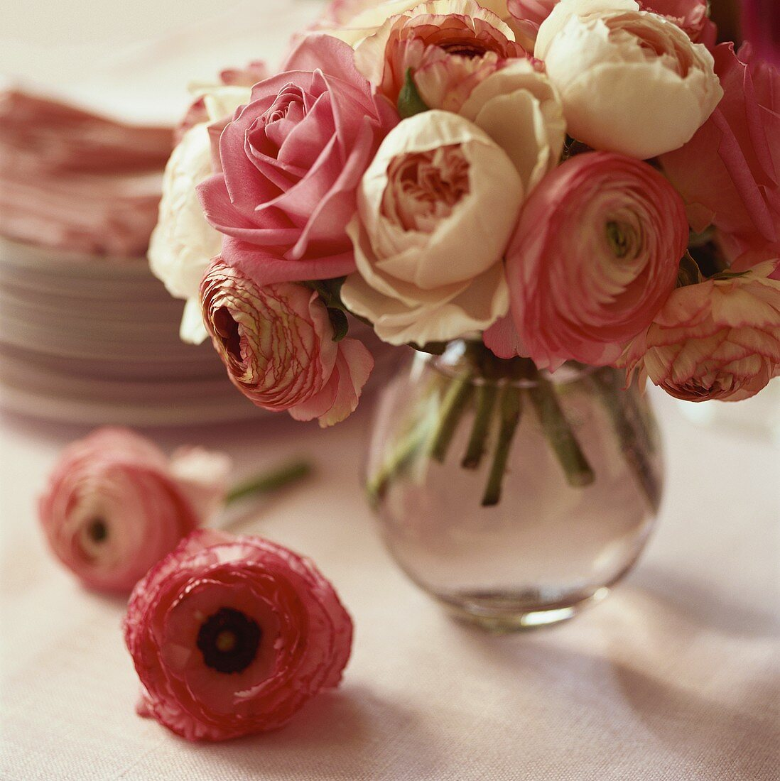 Pink ranunculuses in a vase in front of a pile of plates
