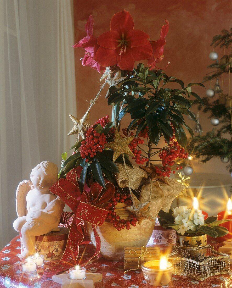 Christmas arrangement of Amaryllis and coral ardisia