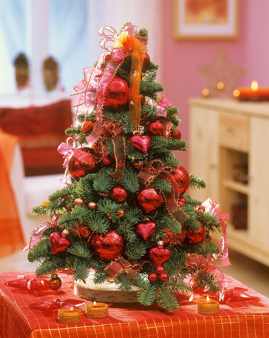 Noble fir decorated as Christmas tree