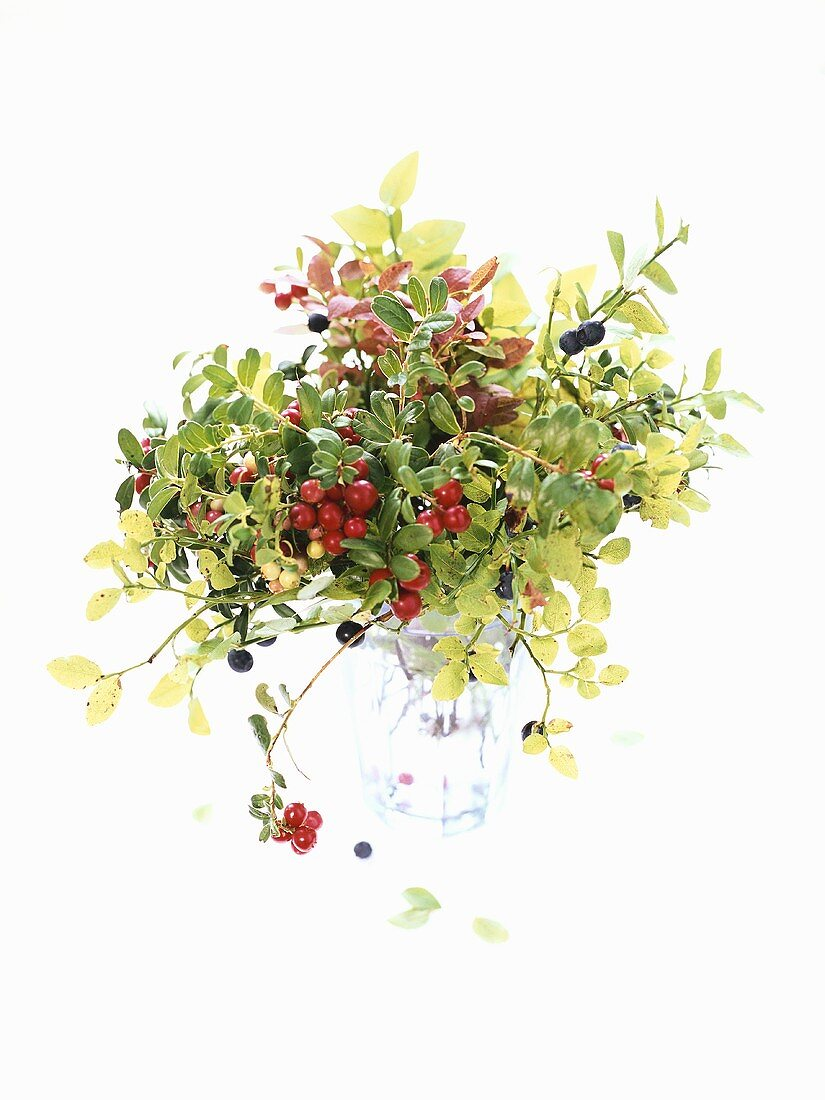 A bunch of cranberry twigs with berries