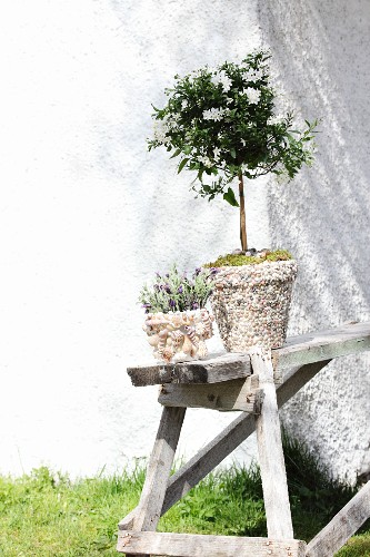 Flowering plants in plant pots decorated with shells and pebbles