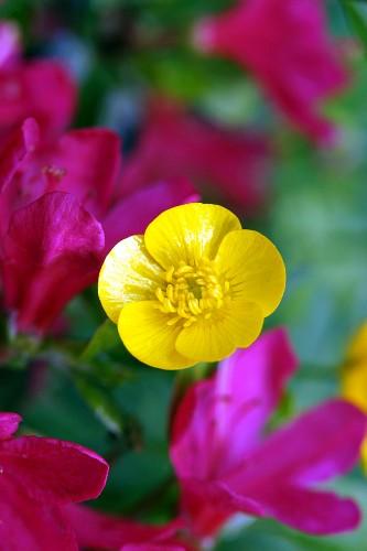 5 Servietten HERBARIUM Serviettentechnik Pflanzen Schmetterlinge Vogel Blumen