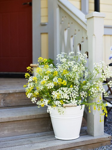 Yellow and white plant in pot