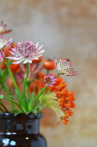 A bunch of pink and orange flowers in a brown vintage jar