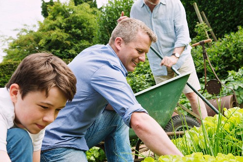 Grandpa, father and son working in the garden