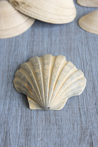 Seashells on grey wooden surface