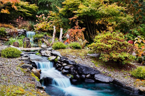 Shrubs and trees in autumnal colours around waterfall feature in landscaped garden