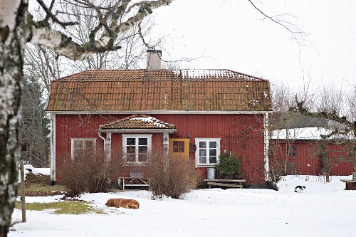 View of falu red house with white windows in snowy garden
