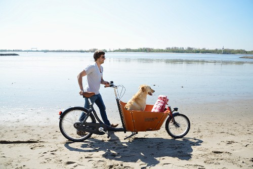 Man and dog with bicycle on their way to beach picnic