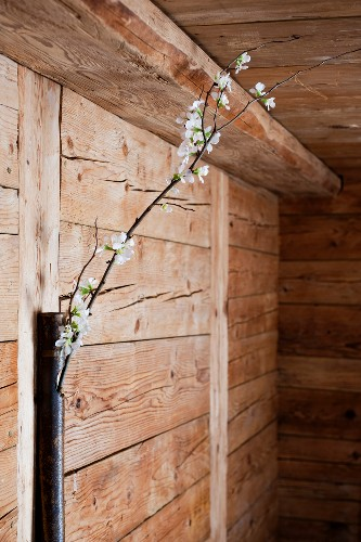 Branch of blossom in metal tube on wooden wall