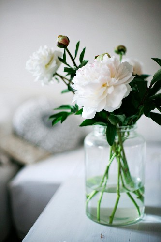 White peonies in glass jar