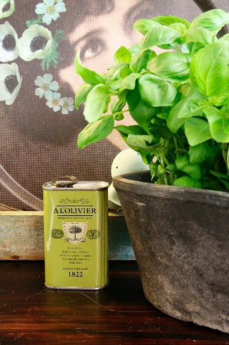 Basil planted in ceramic pot next to can of olive oil