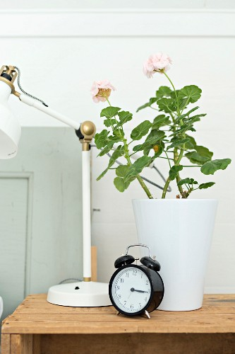 Black, retro alarm clock, geranium in white pot and partially visible, retro table lamp on wooden crate