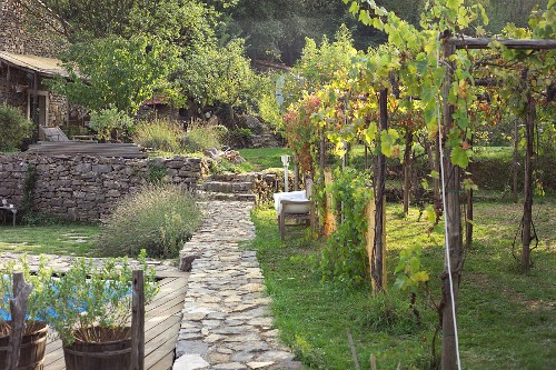 Stone path leading between grape vines and pool in garden