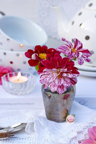 Vase of bicolour dahlias on lace doily with teacups and saucers in background