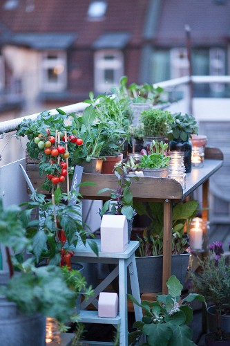 Potting bench on roof terrace decorated with candle lanterns, herbs and vegetable plants