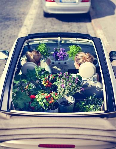 Urban Gardening: Junge Frau mit Grün- und Gemüsepflanzen in Cabrio